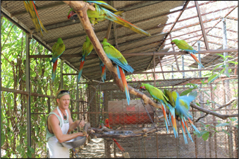Chris Castles Feeding Great Green Macaw