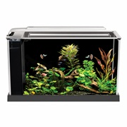Fluval Spec Aquarium Kit - Black - 19 L (5 US gal)