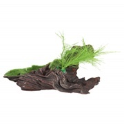 "Fluval Black Driftwood Replica with Moss - Medium - 18 x 11 x 14 cm (7"" x 4.3"" x 5.5"")"
