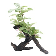 "Fluval Medium African Shade Leaf on Root - 20 cm (8"")"