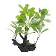 """Fluval Belgium Green on Root - 30 cm (12"""")"""