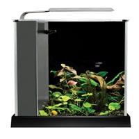 Fluval Spec Aquarium Kit - Black - 10 L (2.6 US gal)