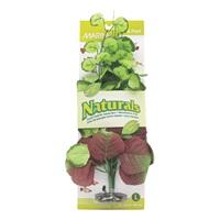 Marina Naturals Pennywort Silk Plant, L