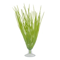 """Marina Betta Kit Hairgrass Plant With Suction Cup - 12.7 cm (5"""")"""