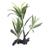 "Fluval Willow Leaf Hygrophila on Root- 30cm (11"")"