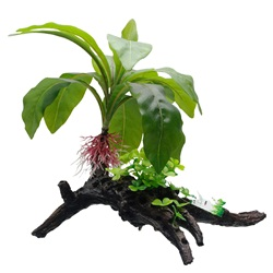 Fluval Decorative Plants,  Striped Anubias, 34cm (13.5) on Root